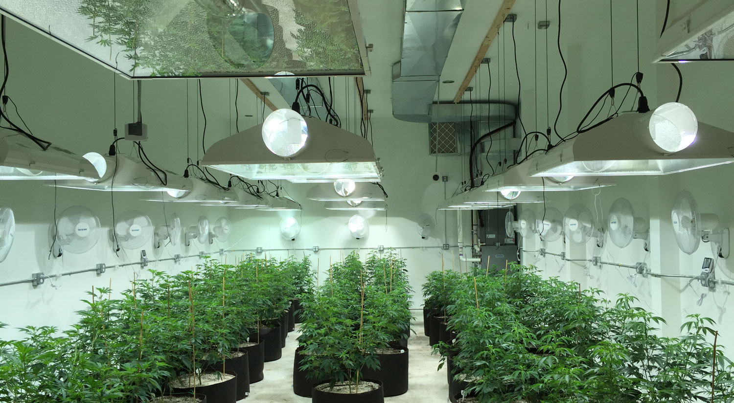 Commercial Marijuana Grow Facility Design Experts – Michigan